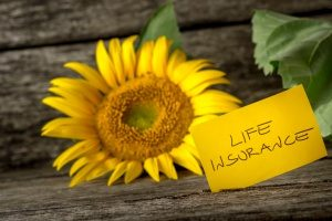 note next to a dandelion full of life that shows the concept of life insurance