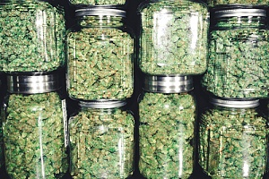jars of weed that are what you need to open a cannabis dispensary