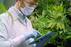 doctor finding out cannabis insurance policies to consider