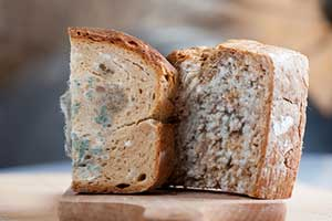 moldy bread as a result of improper food storage