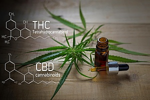 THC and CBD which are found in cannabis