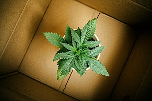 a box that has cannabis in it representing a delivery service