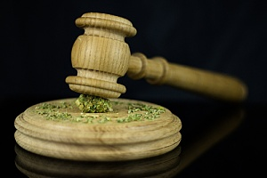 Gavel with cannabis grounds