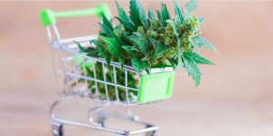 small-shopping-with-cannabis-plant-inside-representing-cannabis-cultators