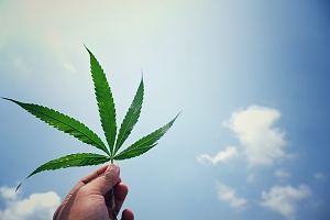 a single cannabis leaf being held up for quality check against a sunny sky