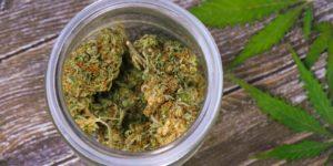 Cannabis in jar on table