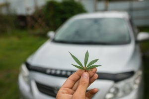 cannabis leaf in front of a automobile used for transportation
