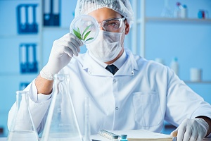 lab worker looking at a cannabis leaf for quality inspection