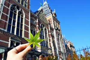 Person holding cannabis flower