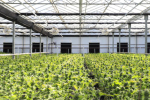 dispensary owners can get cargo insurance to cover possible damages in the future