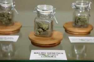 jar in a cannabis dispensary's