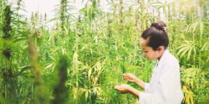 Most Common Cannabis Crop Insurance Claims- Scientist Examining Cannabis Plant