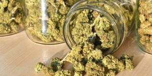 business utilized insurance policy to insure the cannabis products and jars