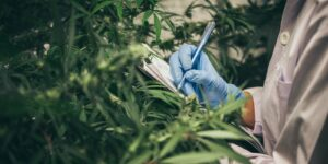 Things To Know About Cannabis Crop Insurance